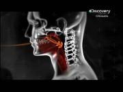 Инородные тела / Body invaders (2012) SATRip
