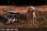 Дорога домой: Невероятное путешествие / Homeward Bound: The Incredible Journey (1993) DVD5 + DVDRip