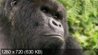 Горная горилла / Mountain Gorilla (2010) BDRip 720p + HDRip