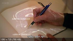 Происхождение человека / Origins of Us (2011) HDTVRip 720p