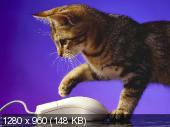 http://i41.fastpic.ru/thumb/2012/0816/32/d5ee2364f352087632123bc906e1f132.jpeg