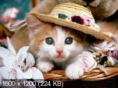 http://i41.fastpic.ru/thumb/2012/0831/bf/d45428e99fc411427137a766b3affabf.jpeg