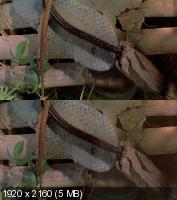 Букашки! 3D / Bugs! 3D (2003) BDRip 1080p