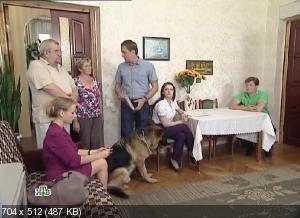Возвращение Мухтара 2: Сезон-8 (2012) SATRip
