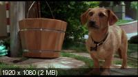 ������� / Garfield (2004) BluRay CEE + BDRip 1080p / 720p + HDRip