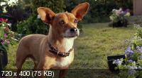 Крошка из Беверли-Хиллз 3 / Beverly Hills Chihuahua 3: Viva La Fiesta! (2012) BluRay + BDRip 1080p / 720p + HDRip